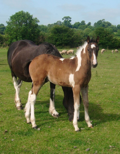 Gale bust colt foal